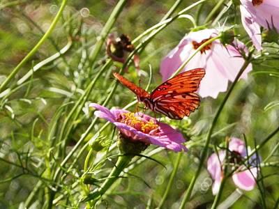 Photograph - Field Of Flowers by Belinda Lee