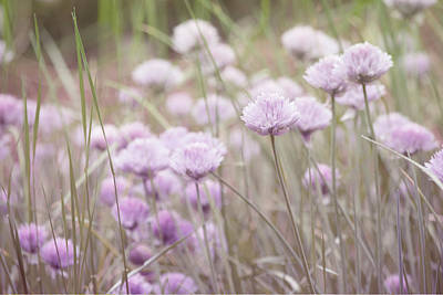 Photograph - Field Of Flowers by Bonnie Bruno