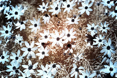Photograph - Field Of Flowers Infrared by John Rizzuto