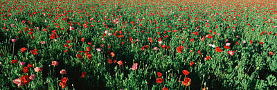 Field Of Flowers, Texas Art Print by Panoramic Images