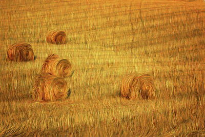 Photograph - Field Of Gold 4 by Nikolyn McDonald