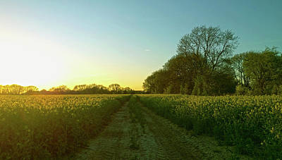 Photograph - Field Of Gold by Anne Kotan