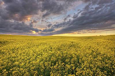 Photograph - Field Of Gold by Dan Jurak