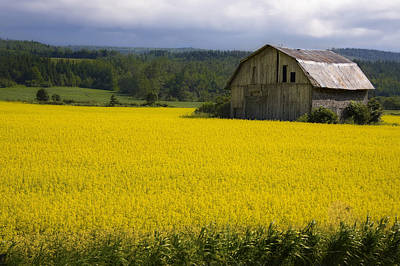 Photograph - Field Of Gold by Michel Legare