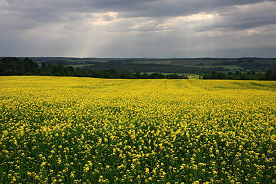 Photograph - Field Of Gold Sherbrooke Quebec Canada by Pierre Leclerc Photography