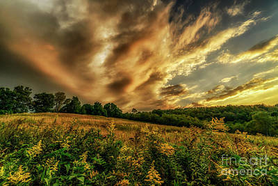 Photograph - Field Of Gold by Thomas R Fletcher
