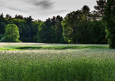 Photograph - Field Of Green by Robert McKay Jones