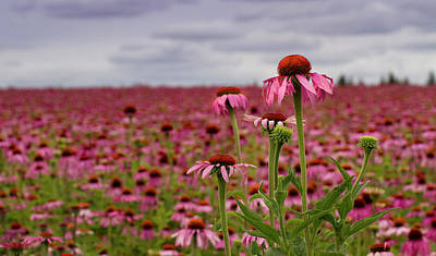 Photograph - Field Of Health by Jean Noren