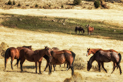 Photograph - Field Of Horses by Belinda Greb