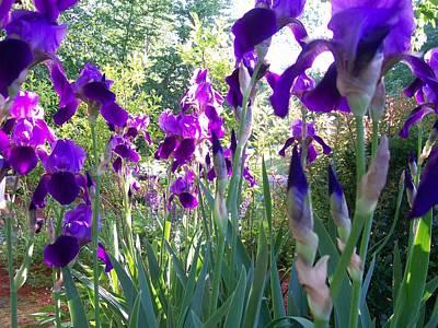 Art Print featuring the digital art Field Of Irises by Barbara S Nickerson