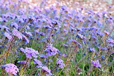 Photograph - Field Of Lavendar by Patricia Haynes