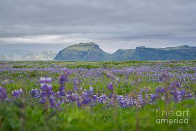 Katharine Hepburn - Field Of Lavender  by Michael Ver Sprill