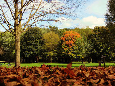Holiday Photograph - Field Of Leaves by Kyle West