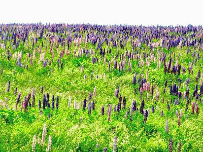 Photograph - Field Of Lupins by Stephanie Moore