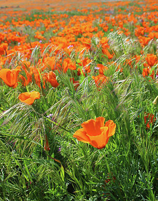 Grass Mixed Media - Field Of Orange Poppies- Art By Linda Woods by Linda Woods