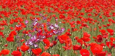 Field Of Poppies  Print by Lanjee Chee