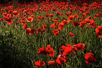 Photograph - Field Of Poppies by Roger Mullenhour