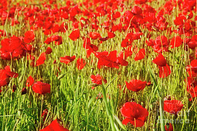 Photograph - Field Of Poppies by Scott Kemper