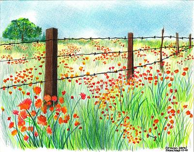 Poppies Field Drawing - Field Of Poppies by Sharon Blanchard