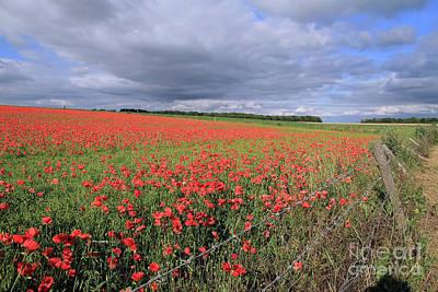 Photograph - Field Of Poppies by Teresa Zieba
