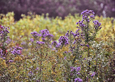 Photograph - Field Of Purple by JAMART Photography