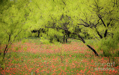 Photograph - Field Of Red Flowers by Iris Greenwell