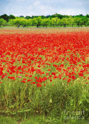 Photograph - Field Of Red Poppies by Elena Nosyreva