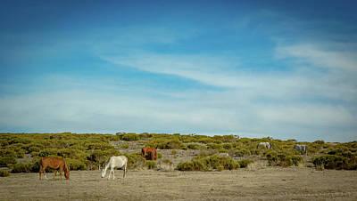 Photograph - Field Of Spanish Horses by Henri Irizarri