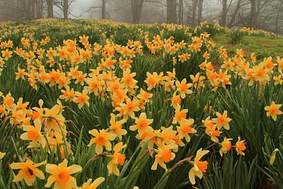 Typography Tees - Field of Spring by Karol Livote