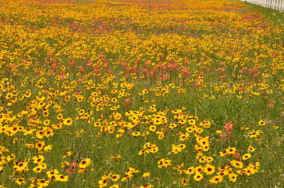 Photograph - Field Of Spring Wildflowers by Frank Madia