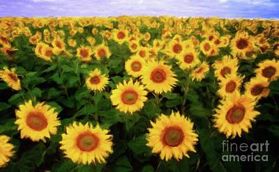 Sunflowers Royalty-Free and Rights-Managed Images - Field of Summer Sunflowers by Sarah Kirk