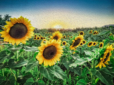Photograph - Field Of Sun by Dave Hall