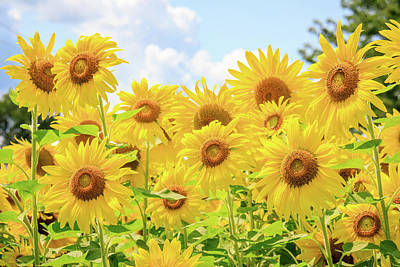 Photograph - Field Of Sunflower Sunshine by Joni Eskridge