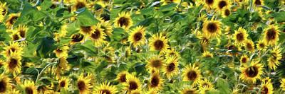 Photograph - Field Of Sunshine by Nikolyn McDonald
