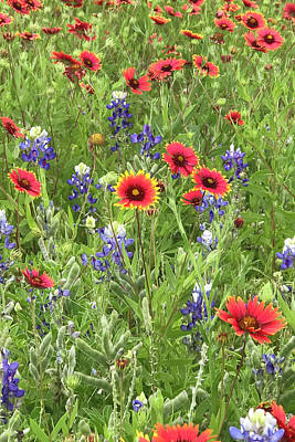 Photograph - Field Of Texas Wildflowers by Art Block Collections