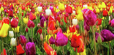 Photograph - Field Of Tulips by Thom Zehrfeld