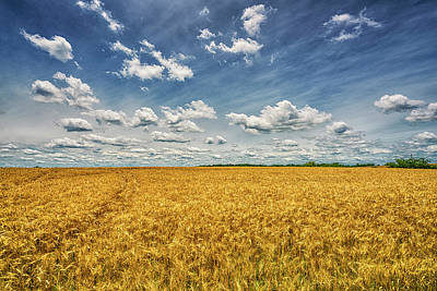 Photograph - Field Of Wheat Missouri 7r2_dsc9481_06192017 by Greg Kluempers