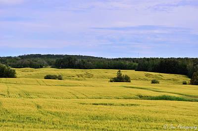 Field Of Wheat Art Print by Soni Macy