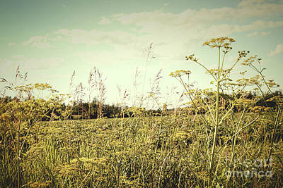 Field Of Wild Dill In The Afternoon Sun  Art Print by Sandra Cunningham