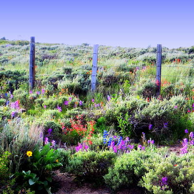 Photograph - Field Of Wildflowers by Karen Shackles