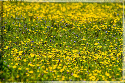 Photograph - Field Of Wildflowers by Mick Anderson