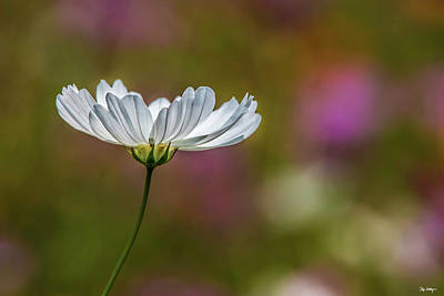 Photograph - Field Of Wildflowers by Skip Tribby