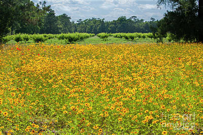 Photograph - Field Of Yellow Dreams by Dale Powell