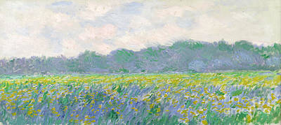 Oil Landscape Painting - Field Of Yellow Irises At Giverny by Claude Monet