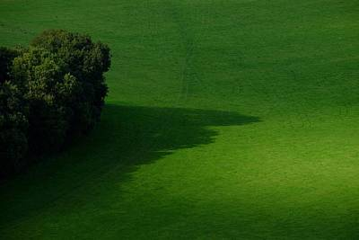 Photograph - Field Shadows by Will Gudgeon