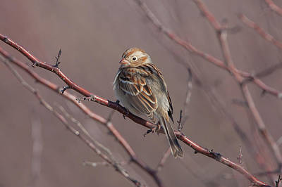 Impressionist Landscapes - Field Sparrow 2 by Ronnie Maum