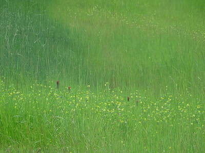 Photograph - Field Texture Pack I by Angela Hansen