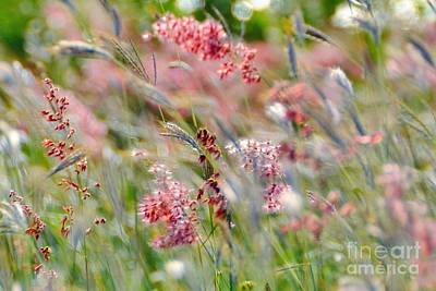 Photograph - Field Weeds-no1 by Darla Wood