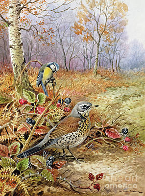 Blackberries Painting - Fieldfare And Blue Tit by Carl Donner