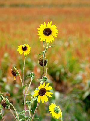 Photograph - Fields And A Sun Flower Plant by James Granberry